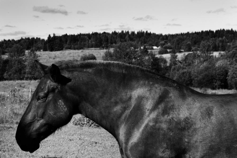 Голова лошади на фоне опушки леса